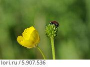 Божья коровка и луговые цветы. Стоковое фото, фотограф Бушаева Екатерина / Фотобанк Лори