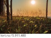Ландыши на закате. Стоковое фото, фотограф Павел Паладьев / Фотобанк Лори