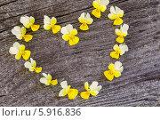 Купить «Сердце из желтых фиалок на деревянном фоне», фото № 5916836, снято 29 апреля 2014 г. (c) Майя Крученкова / Фотобанк Лори