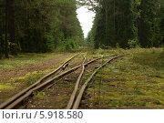 Развилка железной дороги в хвойном лесу. Стоковое фото, фотограф Хельга Танг / Фотобанк Лори