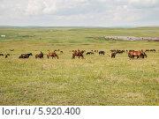 Хакасия. Лошади пасутся на фоне конюшни. Стоковое фото, фотограф Вячеслав Зеленин / Фотобанк Лори