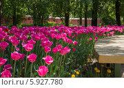 Тюльпаны на клумбе в сквере (2014 год). Стоковое фото, фотограф Дмитрий Емушинцев / Фотобанк Лори