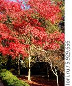 Дерево. Стоковое фото, фотограф Ирина Жосан / Фотобанк Лори