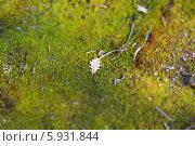 Мох и дубовый лист. Стоковое фото, фотограф Elena Baranovskaya / Фотобанк Лори