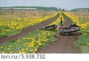 Велосипед лежит на дороге (2014 год). Редакционное фото, фотограф Сапожников Георгий Борисович / Фотобанк Лори