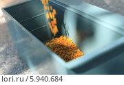 Цветочная пыльца засыпаемая в пыльцеуловитель. Стоковое фото, фотограф Денис Кошель / Фотобанк Лори
