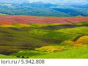 Купить «Холмистые поля Тосканы, Италия», фото № 5942808, снято 30 мая 2013 г. (c) Сергей Новиков / Фотобанк Лори