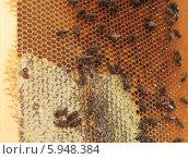 Свежий мед запечатываемый в соте. Стоковое фото, фотограф Денис Кошель / Фотобанк Лори