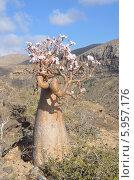 Бутылочное дерево на плато над ущельем Калесан, остров Сокотра,  Йемен (2014 год). Стоковое фото, фотограф Овчинникова Ирина / Фотобанк Лори