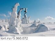 Купить «Цепельские поляны на плато кваркуш», фото № 5960072, снято 27 марта 2009 г. (c) Павел Родимов / Фотобанк Лори