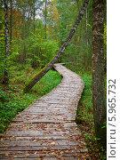 Купить «Дорожка из деревянного настила в осеннем парке», фото № 5965732, снято 6 октября 2013 г. (c) Анна Лурье / Фотобанк Лори
