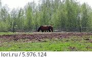 Купить «Лошади на ферме», видеоролик № 5976124, снято 4 июня 2014 г. (c) Кекяляйнен Андрей / Фотобанк Лори