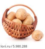 Купить «Лукошко с чистым картофелем», фото № 5980288, снято 31 октября 2013 г. (c) Natalja Stotika / Фотобанк Лори