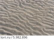 Купить «Песчаное волнистое дно Белого моря во время отлива. Соловки», фото № 5982896, снято 31 июля 2012 г. (c) Горшков Игорь / Фотобанк Лори