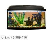Купить «Красивый прямоугольный аквариум на белом фоне», фото № 5989416, снято 24 мая 2014 г. (c) Евгений Ткачёв / Фотобанк Лори
