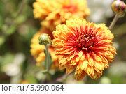 Цветы. Стоковое фото, фотограф Светлана Головченко / Фотобанк Лори