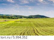 Купить «Поле с молодыми всходами пшеницы», фото № 5994352, снято 27 мая 2014 г. (c) Ольга Сейфутдинова / Фотобанк Лори