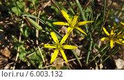 Желтый цветок среди зеленой травы. Стоковое фото, фотограф Александр Коноваленко / Фотобанк Лори