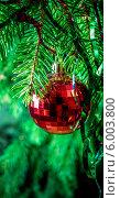 Купить «Красный елочный шар на еловых ветках», фото № 6003800, снято 3 января 2014 г. (c) Любовь Назарова / Фотобанк Лори