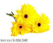 Купить «Букет желтых гербер  на белом фоне», фото № 6006548, снято 9 июня 2013 г. (c) Литвяк Игорь / Фотобанк Лори