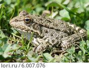 Купить «Комар кусает лягушку», эксклюзивное фото № 6007076, снято 17 апреля 2014 г. (c) Dmitry29 / Фотобанк Лори