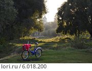 Перед закатом на природе (2013 год). Редакционное фото, фотограф Ольга Коцюба / Фотобанк Лори