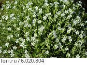 Цветы на летней лужайке. Стоковое фото, фотограф Александр Бураков / Фотобанк Лори