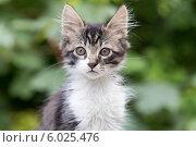 Портрет котёнка. Стоковое фото, фотограф Елена Ларина / Фотобанк Лори