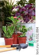 Купить «Пересадка комнатных растений на балконе», фото № 6032884, снято 20 июня 2014 г. (c) Татьяна Ляпи / Фотобанк Лори