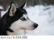 Портрет собаки. Стоковое фото, фотограф Мамочкин Петр / Фотобанк Лори