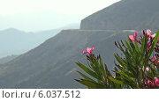 Цветы на фоне гор. Стоковое видео, видеограф Евгений Егоров / Фотобанк Лори