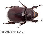 Большой жук на белом фоне. Стоковое фото, фотограф Федорец Артем / Фотобанк Лори