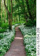 Купить «Дикорастущий чеснок в лесу», фото № 6054208, снято 17 мая 2014 г. (c) Татьяна Кахилл / Фотобанк Лори