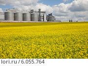 Купить «Зернохранилище на поле цветущего рапса», фото № 6055764, снято 12 июня 2014 г. (c) Владимир Мельников / Фотобанк Лори