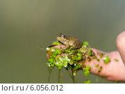 Лягушонок. Стоковое фото, фотограф Наталья Есипова / Фотобанк Лори