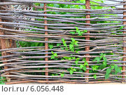 Купить «Плетень», фото № 6056448, снято 20 июня 2014 г. (c) александр афанасьев / Фотобанк Лори