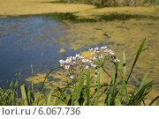 Цветы на фоне реки. Стоковое фото, фотограф Яна Зайцева / Фотобанк Лори