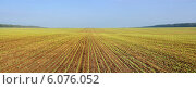 Купить «Панорама поля с озимыми всходами пшеницы», фото № 6076052, снято 28 сентября 2012 г. (c) Ольга Сейфутдинова / Фотобанк Лори