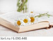 Купить «Ромашки на открытой книге», фото № 6090448, снято 4 июля 2014 г. (c) Darkbird77 / Фотобанк Лори