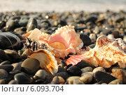 Купить «Пляж Сочи. Черное море», фото № 6093704, снято 27 декабря 2012 г. (c) Metzlof / Фотобанк Лори