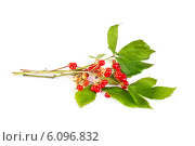 Купить «Костяника», фото № 6096832, снято 5 июля 2014 г. (c) Parmenov Pavel / Фотобанк Лори
