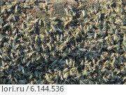 Купить «Облепленное комарами мокрое бревно на берегу реки, массовый вылет», фото № 6144536, снято 15 июля 2014 г. (c) Андрей Забродин / Фотобанк Лори