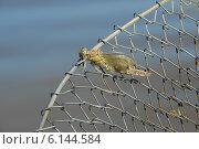 Купить «Молодая стрекоза, сидящая на металлическом рыболовном садке. Отрастание крыльев», фото № 6144584, снято 15 июля 2014 г. (c) Андрей Забродин / Фотобанк Лори