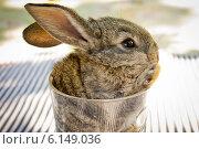 Кролик в стакане. Стоковое фото, фотограф Александра Берг / Фотобанк Лори