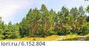 Опушка хвойного леса. Стоковое фото, фотограф ВЛАДИМИР КУШПИЛЬ / Фотобанк Лори