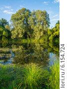 Купить «Ива на берегу реки Тёша», фото № 6154724, снято 15 июля 2014 г. (c) Аркадий Рыпин / Фотобанк Лори
