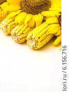 Кукуруза и подсолнухи. Стоковое фото, фотограф Дмитрий Бодяев / Фотобанк Лори