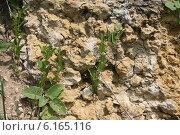 Купить «Фрагмент горной стены», фото № 6165116, снято 8 июня 2014 г. (c) Александр Плахов / Фотобанк Лори