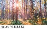 Купить «Национальный парк Русский север, соколиный бор», фото № 6183532, снято 19 июля 2014 г. (c) Julia Shepeleva / Фотобанк Лори
