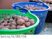 Свежий картофель в корзине. Стоковое фото, фотограф Елена Белоус / Фотобанк Лори
